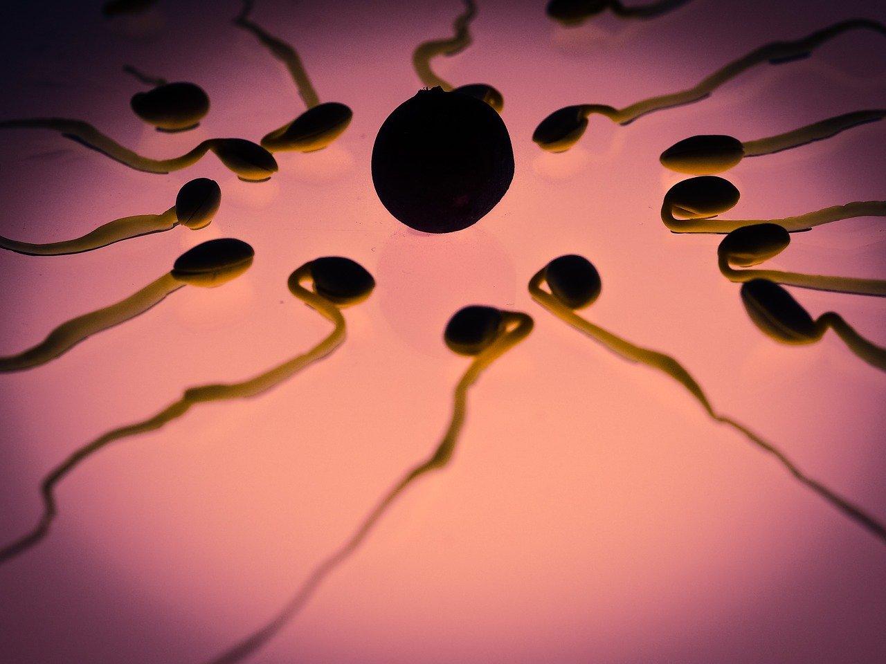 calculer sa date d'ovulation